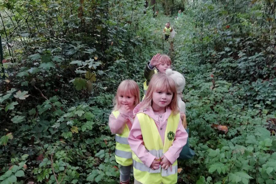 Herfstkriebels in het bos
