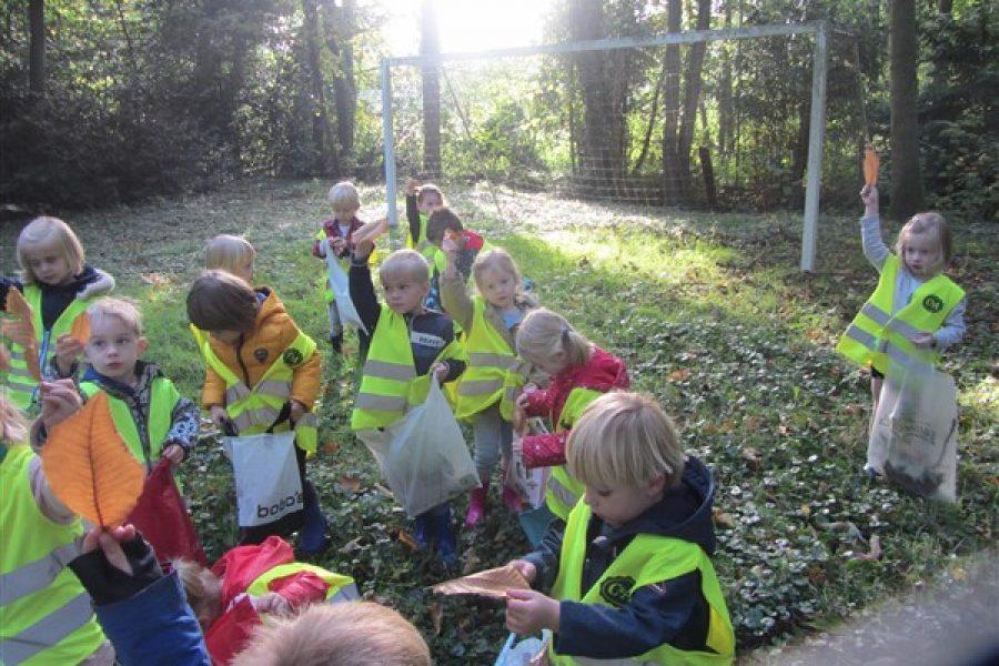 Alle bomen in het bos laten nu hun blaadjes los!!!    Bijtjesklas